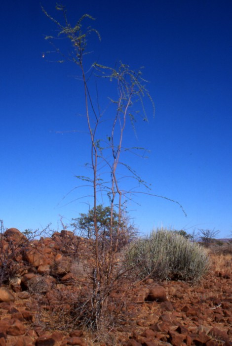 Palwag, Namibia, January 2002