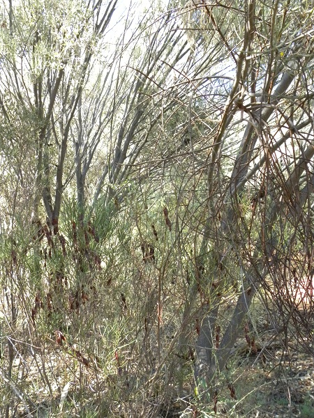 Copyright for all photos on this page by Dr. Karl Grips, Bonn Alice Springs Desert Park, Australia, January 22nd, 2012